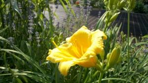 Flowers in Riverside Park